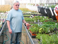 T & T Seeds owner Kevin Twomey checks on bedding plants sheltered within one of the company's greenhouses.