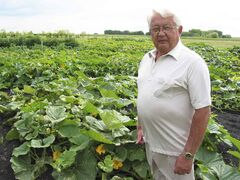 In this file photo, Stan was pictured with hundreds of pink pumpkins growing in his daughter's house on Forbes Road for his recent fundraising campaign for CancerCare Manitoba.