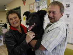 Carol and Randy Ritchie of Stonewall will take home Sharona, a female border collie mix.