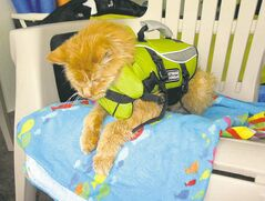 supplied photos