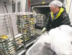 Richard Degagne unloads used trays after they are returned to the  facility for cleaning.