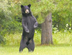 Bears are more afraid of us than we are of them.