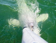 A beluga whale nudges our tour group's Zodiac: 'It wants to play with us,' our guide assures us.