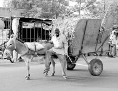 A man  hauls straw on a donkey-powered cart along a main highway west of Niamey, Niger. With an  average annual income of less than $250, Nigeriens are among the world's poorest people.