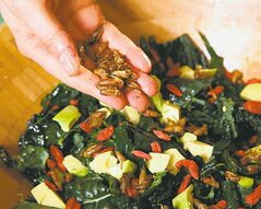 Crickety kale salad. Without additional processing, crickets weigh in at 65 per cent protein.