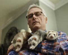 In this Wednesday, Dec. 19, 2012 photo, Pet Wright, an advocate for legalizing ferret ownership in California, holds his three ferrets at his home in La Mesa, Calif. The ferrets live peacefully along with Wright's three dogs and a cat. Most pet stores in California carry ferret food and supplies. (AP Photo/Lenny Ignelzi)