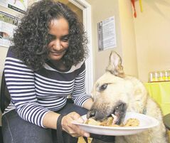 Sherri-Lyn Kowalchuk hangs onto her plate as her Shepard-Husky cross, Annabelle, 9, chows down.
