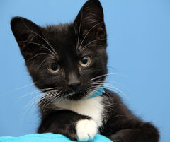 Since Sept. 1, the humane society has received 1,565 cats and kittens.