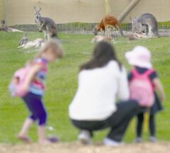 Val Manaigre and her children, Emily, 4, (left) and Kennady, 2, watch the  red kangaroos at the zoo Friday.