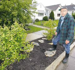 Barrie Fraser must modify the attractive garden he planted on the boulevard near his Valour Road home.