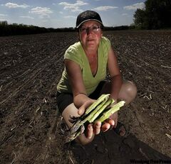 Vivian Jamault shows off spears of asparagus on her U-Pick farm in Notre Dame de Lourdes. Harvesting of the beneficial vegetable is in full swing in Manitoba.