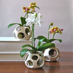 New York-based ceramic artist Nicholas Newcomb's earthenware air pod holders showcase miniature orchids in New York. (AP Photo/air pod plant holders, iloveairpods.com)