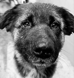 Spirit  (shepherd cross) , became Tinder (adopted)