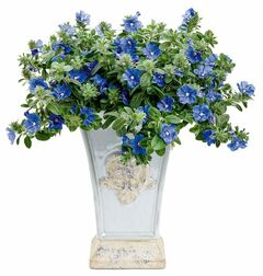 New for 2013, Blue My Mind, a dwarf Morning Glory, spills forth with true blue flowers. No need to deadhead!