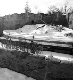 The former polar bear exhibit at the zoo. The zoo will not divulge inspection reports.