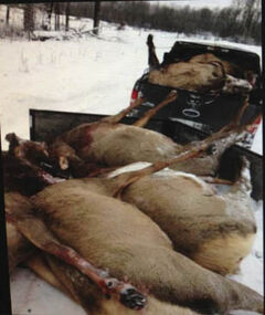 Dead elk in Facebook image.