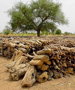 BARTLEY KIVES / WINNIPEG FREE PRESS