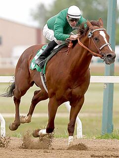 Bobadieu, with jockey Mark Anderson up, speeds to victory Sunday in the Free Press Stakes.