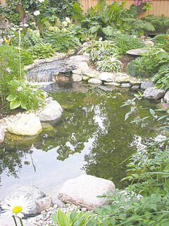 Ponds can be situated in either shade or direct sunlight. It's important to avoid water runoff from entering your pond and upsetting its nutrient balance.