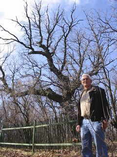 Jim Ludlam, local parks board member, says nobody knows the tree's real age.