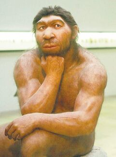 Model of a Neanderthal at Prehistoric Museum in Halle, Germany.