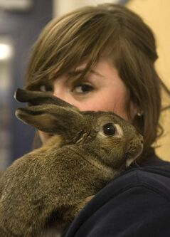 Despite the best of intentions, many pet rabbits are turned over to animal shelters or abandoned.