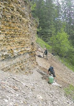 Paleontologists work in 2010 on fossil-bearing sediments at the 'North Face' fossil site in Driftwood Canyon Provincial Park, where the extinct hedgehog fossils were collected in 2010.