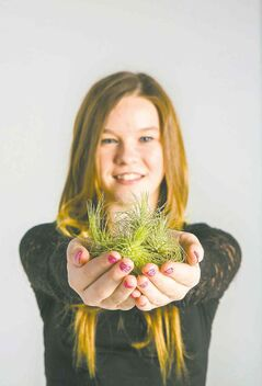 Madison Dueck, age 7, delights in filling glass orbs, inset, with live Tillandsia plants for hanging on the Christmas tree or decorating a table.