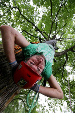 Chris Barkman gazes down from a treetop in Pembina Fisher Park in Winnipeg, which is a paradise for tree climbers.
