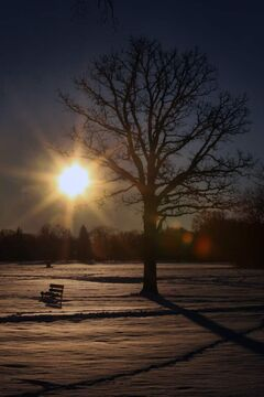 The sun rises in Assiniboine Park this morning.