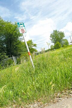 The land around a Brandon bus stop is overrun with leafy spurge weeds.