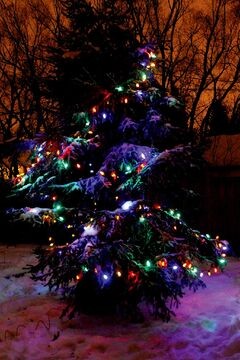 This tree means family and memories and love