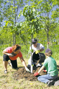 MLA for Seine River Theresa Oswald and her family plant a basswood tree. Oswald has been involved with the event for several years.