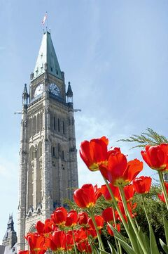 The top of Ottawa�s Peace Tower offers an impressive view of the city, Gatineau, Quebec and tulips, which were a gift from the Netherlands to thank Canada for its help during the Second World War.
