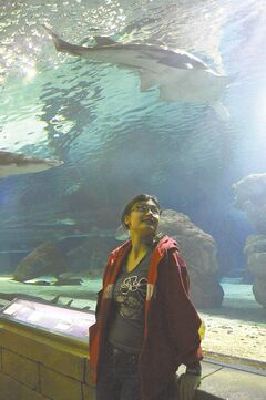 Sarah gets close and personal with a Sawfish via a walkway through the Sea Life aquarium.