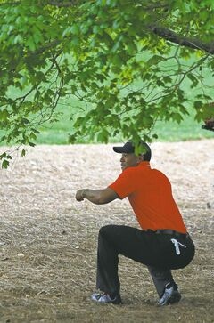 Tiger Woods looks for his ball after hitting out of the rough off the second fairway on Sunday.