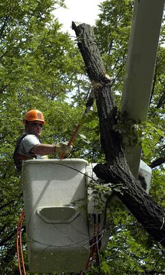 A bucket truck and Hydro clearance may be needed when removing a tree.