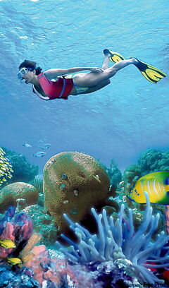 The waters around Cancun are among the best in the world for  snorkelling and experiencing the colourful sealife.