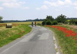In this June 19, 2014 photo, bikers ride on a road between between Amboise and Chenonceaux, in France. There are hundreds of miles of bike trails through the chateaux towns of the Loire Valley. (AP Photo/Karen Schwartz)
