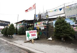 Christmas trees are on display for sale in Toronto on Thursday, December 18, 2014. The lower loonie will put more money in the pockets of Canadian Christmas tree exporters this year, just as the industry is preparing to ramp up production to meet an anticipated surge in demand from south of the border. THE CANADIAN PRESS/Nathan Denette