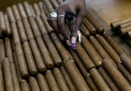 Even with the announced thawing of relations between the U.S. and Cuba, commercial sales of Cuban cigars remain illegal in the U.S. A worker is shown selecting cigars at the H. Upmann cigar factory in Havana, Cuba, March 1, 2013, where people can take tours as part of the 15th annual Cigar Festival. THE CANADIAN PRESS/AP/Ramon Espinosa