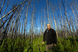 Jerry Cook shows saplings growing last September north of Grand Rapids where a massive fire in 2008 destroyed more than 50,000 hectares of forest.