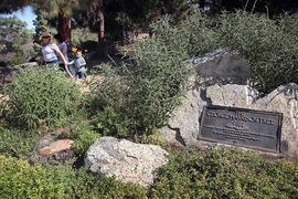 FILE - In this July 22, 2014, file photo, visitors walk past a plaque marking the George Harrison Tree, and the stump where it formerly stood at lower left, in Los Angeles' Griffith Park. A tree has been planted in the park in memory of Harrison to replace one that was killed by a beetle infestation. City News Service says a yew pine honoring the late Beatles guitarist was planted Wednesday, Feb. 25, 2015, in the park on what would have been Harrison's 72nd birthday. (AP Photo/Nick Ut, File)