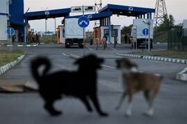 Dogs play as the Russian aid convoy carrying the first consignment of aid moves to a border control point with Ukraine, in the Russian town of Donetsk, Rostov-on-Don region, Russia, Wednesday, Aug. 20, 2014. (AP Photo/Pavel Golovkin)