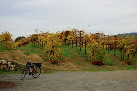 Cruising through the Sonoma Valley on your bicycle makes for an incredible journey.