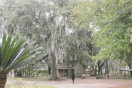 Did you know that Spanish moss, which hangs from the cypress trees in the Deep South, was once used in automobile car seats?