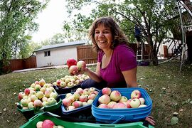 Getty Stewart, founder of Fruit Share, helps pick apples from one of their donors last fall.