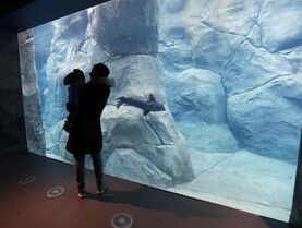 Michelle Brown and her son Nathan, 1, watch the remaining seal as it swims through the underwater viewing area of the seal enclosure at Assiniboine Park Zoo.