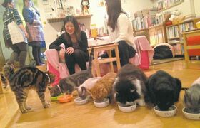 Julie Makinen / Los Angeles Times