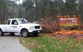 Used jack-o'-lanterns are picked up from the streets and trails of Mount Doug Park and Parkway in Saanich, B.C., after Halloween in 2012. Nearly 500 pumpkins are collected from the area during the first week of November. THE CANADIAN PRESS/HO, Ellice Recycle Ltd.